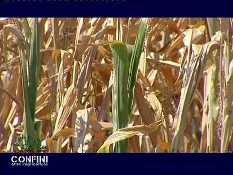 Confini Oltre l'agricoltura (25^ puntata - 02/04/2012) - OGM e biologico