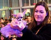 Etnapolis: il Chihuahua Tyra vince il sesto Dog Model