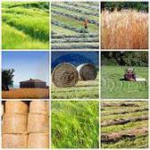 """Pil: l'agricoltura crolla sotto il """"peso"""" di Imu, costi record, prezzi sui campi non remunerativi e degli effetti disastrosi del maltempo"""