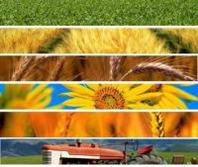 Crisi: la nuova legislatura deve riaccendere i riflettori sull'economia reale. Più attenzione all'agricoltura