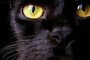 Enpa, il video del gatto abbandonato diventa un caso sul web