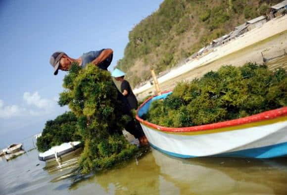 Le isole Fiji invase dalle alghe: tutta colpa dei cambiamenti climatici