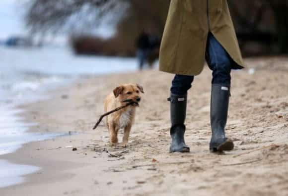 Se il cane è il migliore amico dell'uomo il merito è della rivoluzione agricola