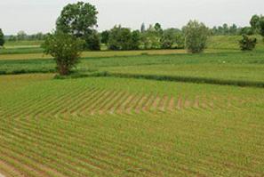 wwf piano pesticidi agricoltura sostenibile