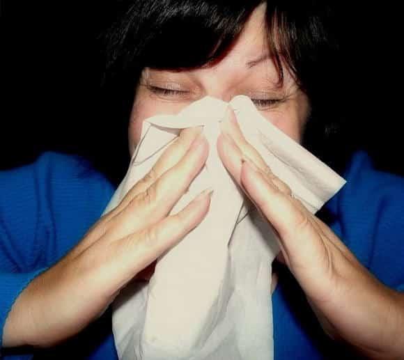 Allergia artemisia