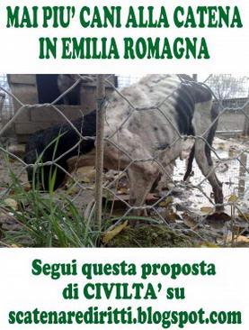 Animalista fa lo sciopero della fame da 20 giorni per i diritti animali