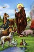 Il Basso Pavese celebra Sant'Antonio