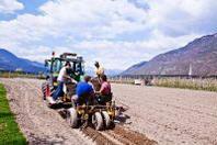 Cina, Coldiretti: dai campi di lavoro cibo anche per le nostre tavole