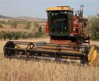 Guidi (Confagricoltura) interviene sulla chiusura delle imprese agricole