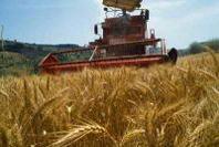 Agricoltura: aumentano ancora i costi di produzione