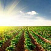 Cia di Crotone: confronto sulle prospettive di sviluppo dell'agricoltura