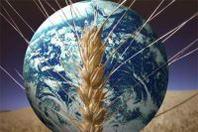 Unioncamere: l'agricoltura perde quasi 17mila imprese nel 2012