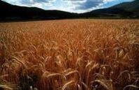 Catania incontra le associazioni ambientaliste: mantenere un'agricoltura attiva sul territorio