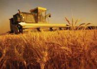 Il decalogo di AIAB per l'agricoltura italiana