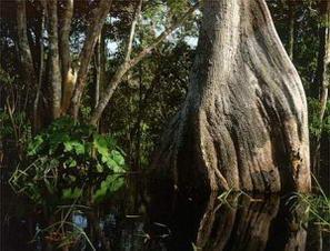 Amazzonia, in ginocchio per il clima un'area grande due volte la California