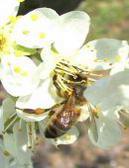 Report Efsa su api e neonicotinoidi: Agrofarma a sostegno del loro corretto utilizzo