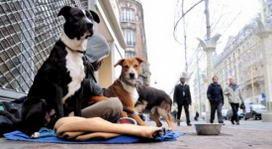 randagismo puglia crisi animalisti