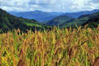 A Enna il Gie-Cia cerealicolo regionale