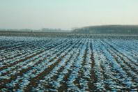 Temperature sotto zero: gelano verdure ed ortaggi