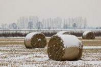Nei campi arrivo il gelo dopo un 2012 da caldo record