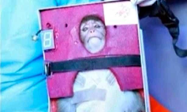 """Viaggi nello spazio: è polemica sulla scimmia iraniana """"lanciata"""" in una sonda"""