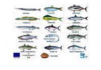 Parte dal Veneto e da Treviso la Rotta italiana del buon pescato