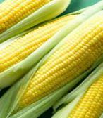 Mais, ASSOSEMENTI: l'industria è pronta a raddoppiare la superficie per la produzione di sementi