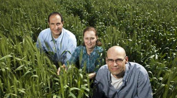 Vaccinare le piante contro batteri, funghi e insetti la soluzione che supera gli OGM