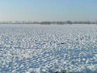 Maltempo: neve anche in pianura, a rischio le consegne di prodotti agricoli freschi nei mercati