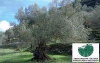 """Un oliveto biologico per il progetto """"Piantiamo i valori"""""""