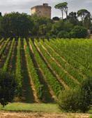 Vini, in Enoteca Regionale Emilia Romagna si scopre il Centesimino
