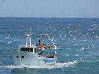 Pesca, Mipaaf: adottato programma nazionale 2013-2015