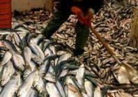 Buon pescato italiano - Tipico fresco e sano