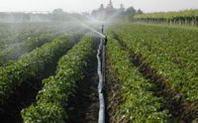 Expo 2015: bando sulla sostenibilità agroalimentare