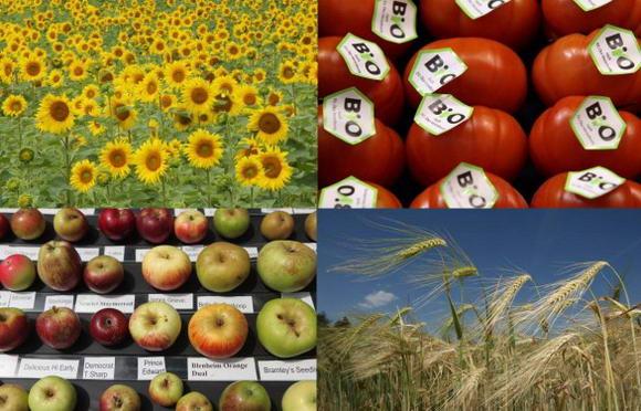 Slow food: 14 punti per una nuova politica alimentare in Italia