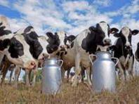 Dopo tre anni torna il pericolo multe per le quote latte