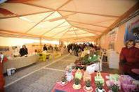 Oltre al Festival del canto del gallo, moltissime attrazioni alla fiera della Rovere