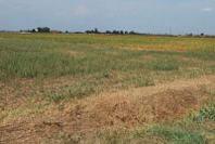 Campania, dichiarato lo stato di calamità per aiutare gli agricoltori colpiti da avversità atmosferiche