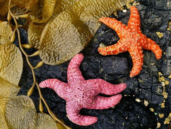 Le più belle stelle marine: 5 immagini per sognare