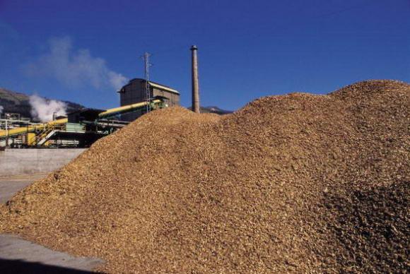 Asia Pulp & Paper dice stop alla deforestazione. Ma gli ecologisti restano cauti