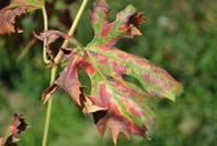 Vivaisti viticoli veronesi a confronto in Valpolicella per parlare delle malattie del legno della vite