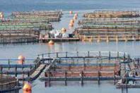 """Aquamed, Api (Confagricoltura) """"2013 anno cruciale per lo sviluppo dell'acquacoltura"""""""