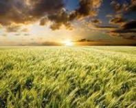 Il Piano Riassicurativo Agricolo 2013 è stato approvato