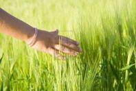 Elezioni: Agrinsieme, la nuova legislatura segni una svolta in campo agricolo