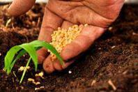 Redditi agricoli in calo in Lombardia