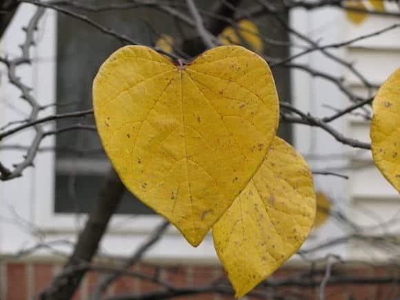 L'innamoramento è scatenato dalla tempesta biochimica perfetta - BioNotizie.com