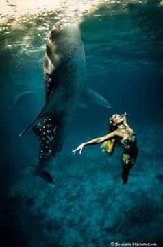 campagna di protezione degli squali