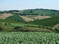 Coldiretti Marche, dissesto aree interne causato da scomparsa agricoltori: - 21.000 in 30 anni