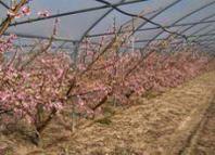 Cia di Lecce: prove in campo per la raccolta degli scarti di potatura