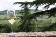 Vini. L'Emilia Romagna racconta il suo lato bio e cosmopolita a Vinitaly